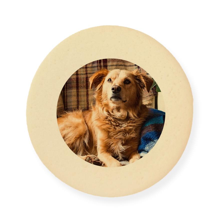 ゴールデンレトリバーが印刷された大判プリントクッキー